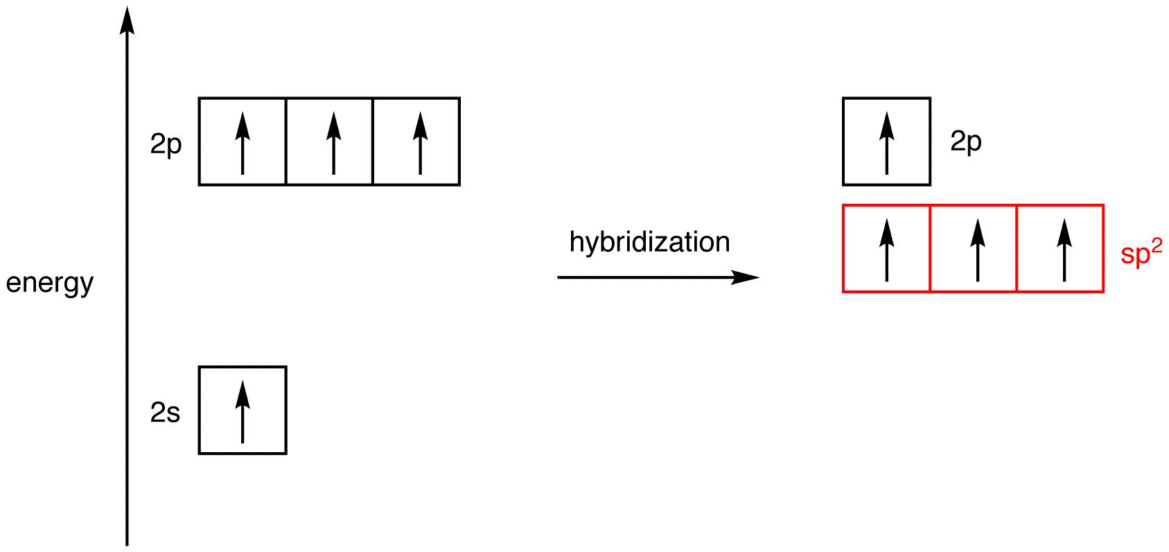 Hybridization ochempal pooptronica Images