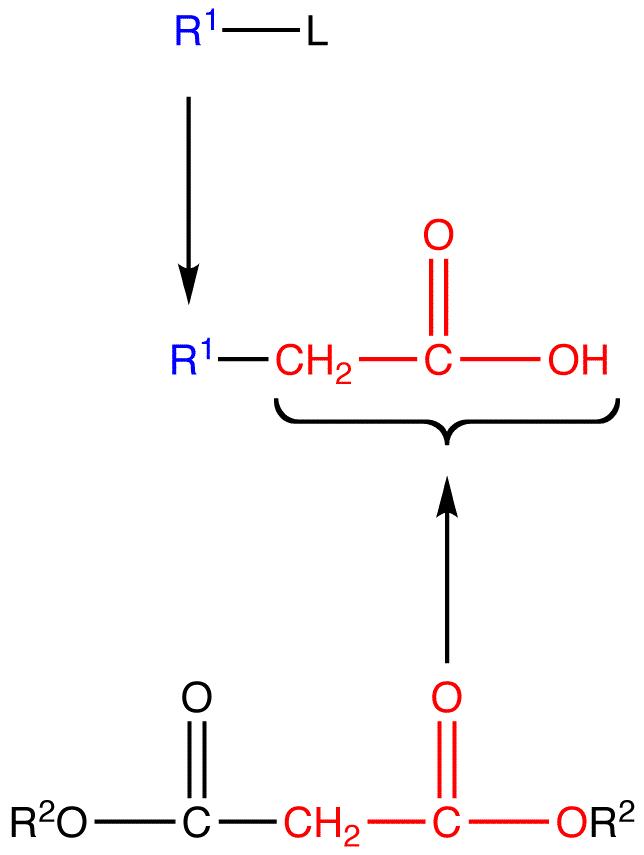 Malonic Ester Synthesis Ochempal