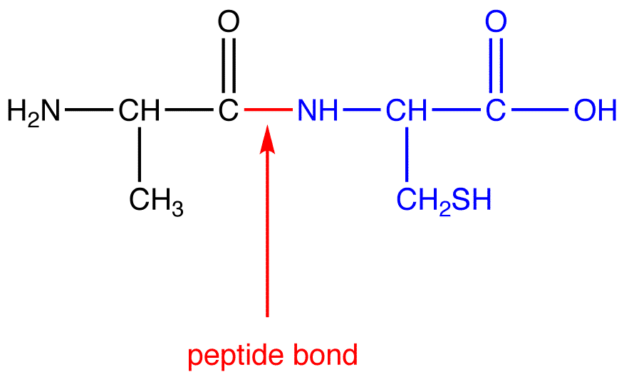 Bond Linking Monomers Types With Concepts Videos And Examples